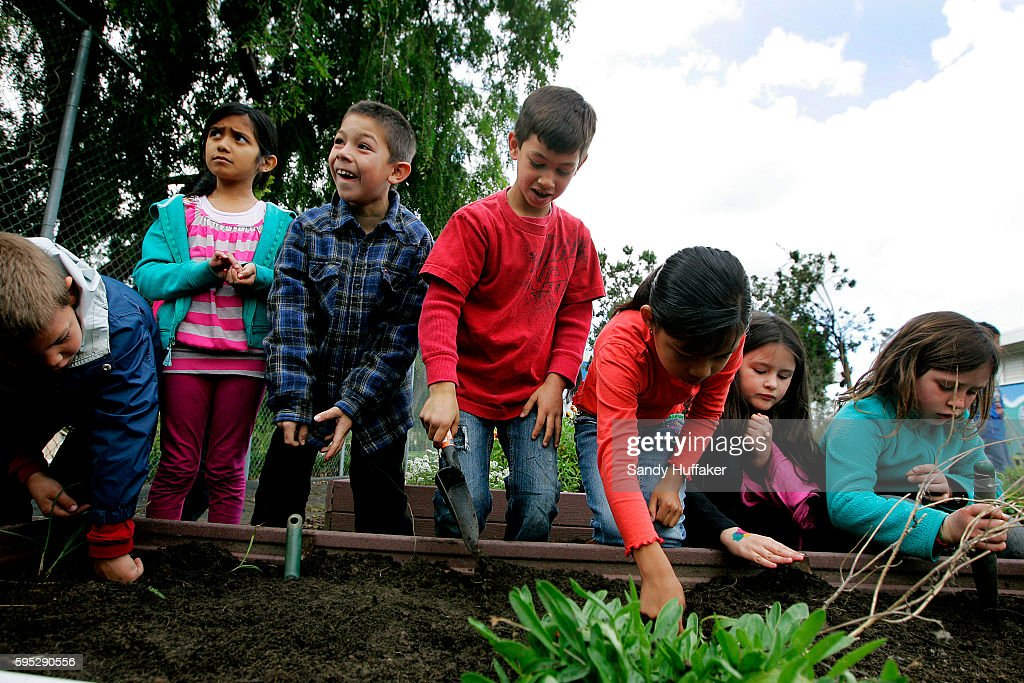 School kids from McKinley Elementary School plant vegetable seeds at the Octopus Garden on Tuesday March 22 2011 in San Diego CA Gardening has become...