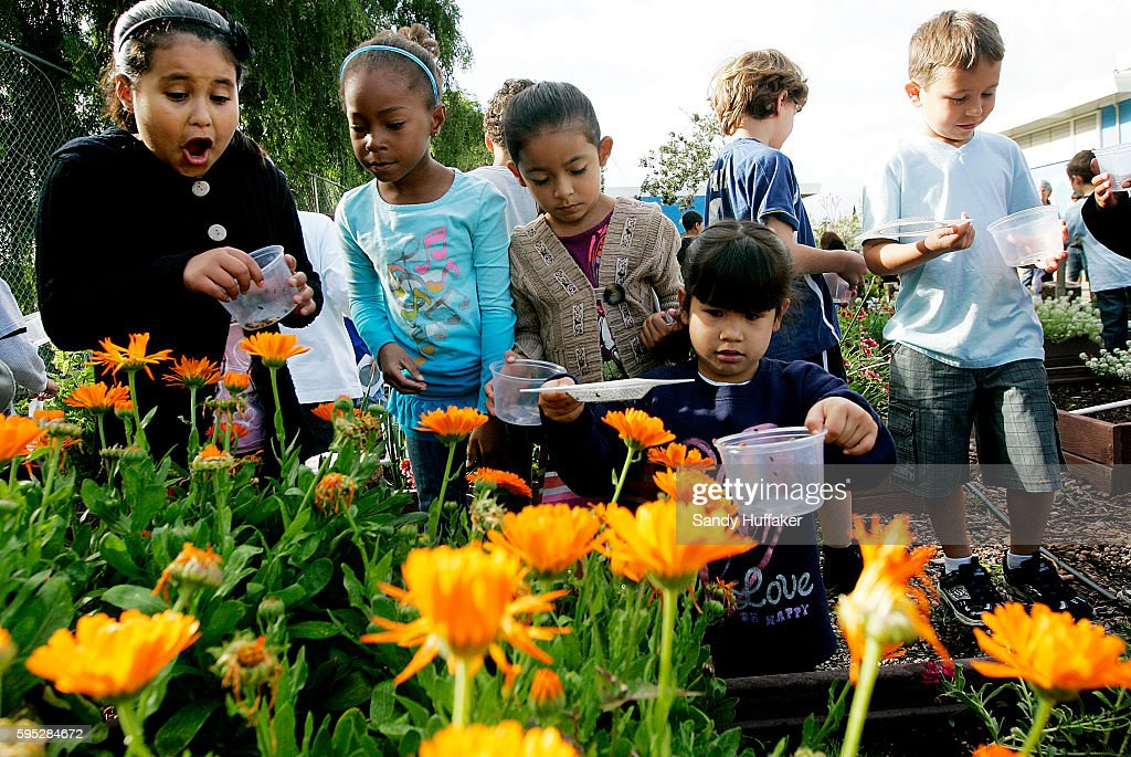 School kids from McKinley Elementary School release Ladybugs at the Octopus Garden on Tuesday March 22 2011 in San Diego CA Gardening has become a...