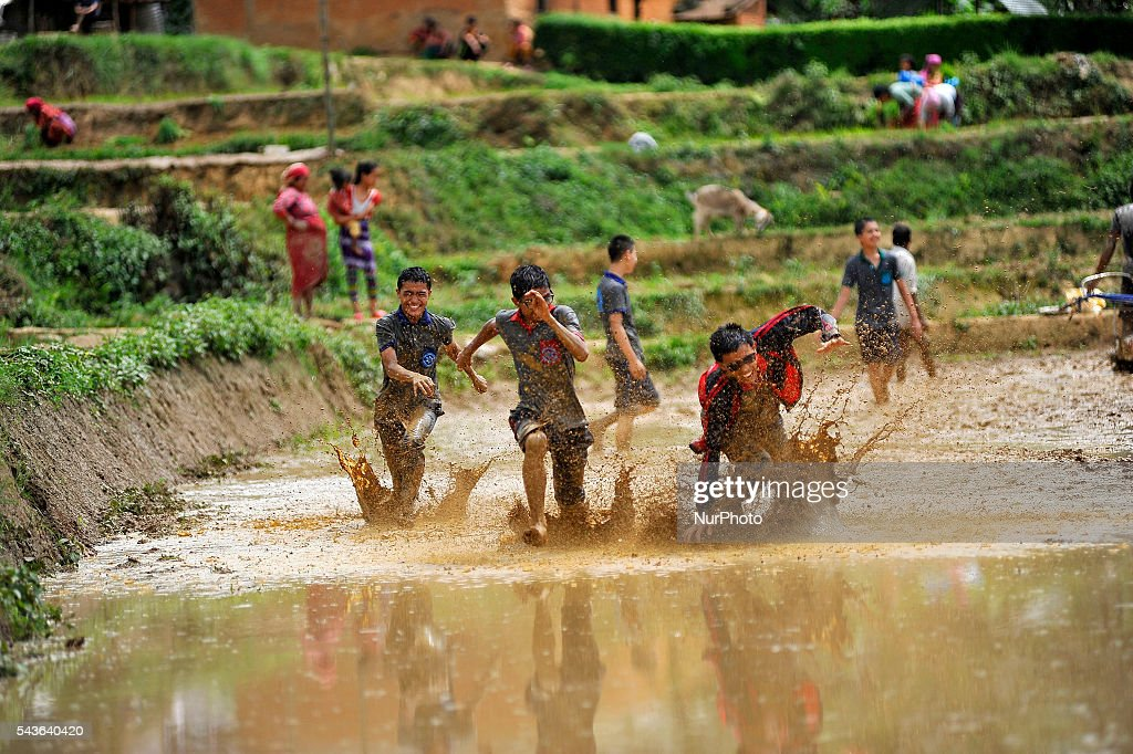 "School Kids playing on a Rice Planation ground during the celebration of National Paddy Day ""ASHAD 15"" Rice Plantation at Chapagaun, Patan, Nepal on June 29, 2016. Nepalese people celebrates Rice Plantation (National Paddy Day) Celebration on ""ASHAD 15"" (Nepali Calendar Date). Nationwide by planting rice, playing on mud and eating curd and beaten rice in the rice field. Due to the less rainfall on monsoon season, Most of the people Plants Rice by pumping water from nearer water source."