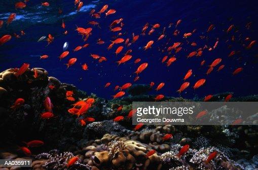 School of Fish : Stock Photo
