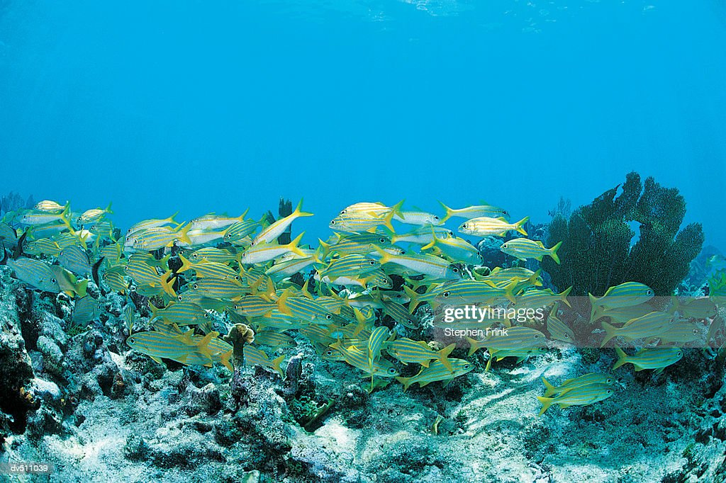 School of fish : Stock Photo