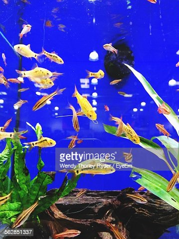 Glasgow school stock photos and pictures getty images for What is the fastest swimming fish