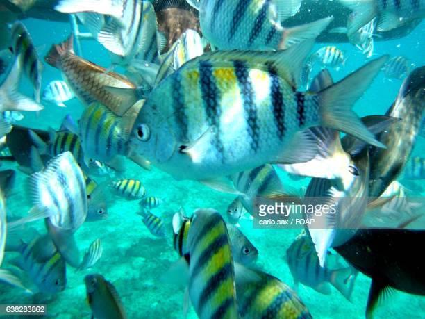 School of fish swimming underwater