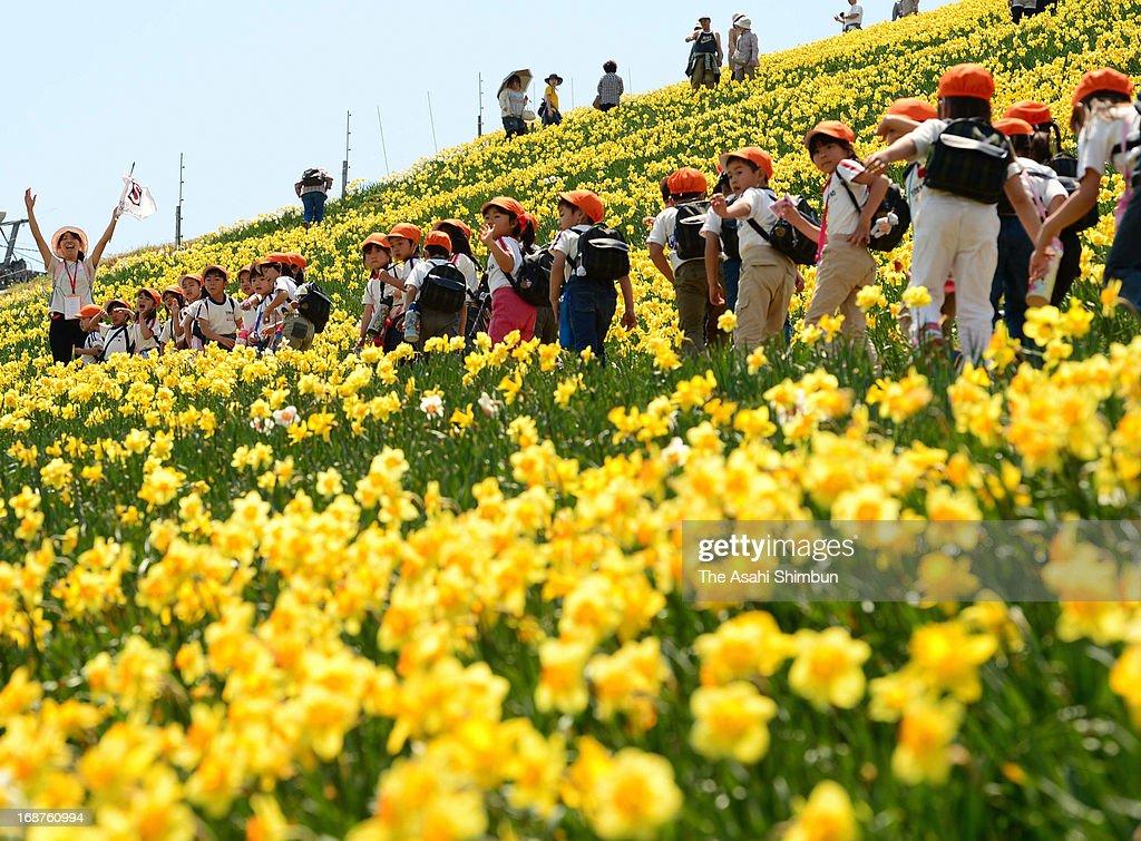 School pupils stroll in the fully-bloomed narcissus field at Biwako Valley on May 14, 2013 in Otsu, Shiga, Japan.