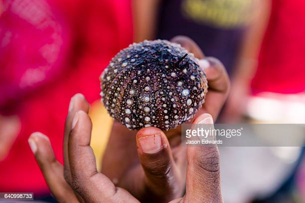 School students on an excursion touch sea urchin they found on the beach.