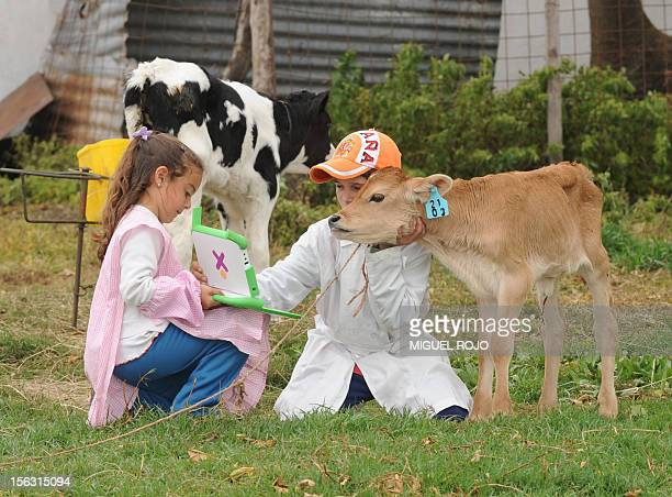 Schoolchildren take picture of a calf with their laptop during a visit of a farm in Rincon de Vignoli department of Florida some 80 km north of...