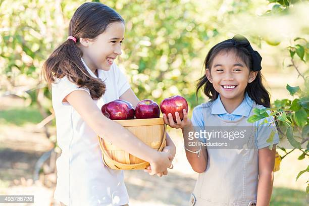 Schoolgirls picking apples in orchard during field trip
