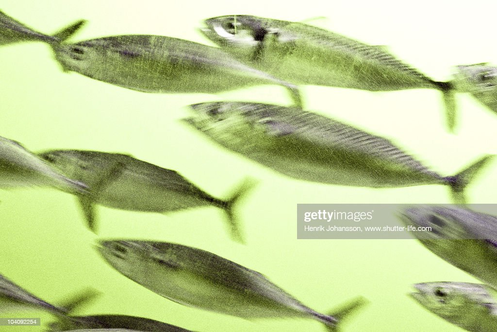 Schooling fish with a green tint : Stock Photo