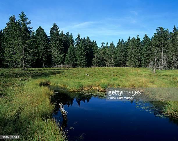 Schuetenbergmoor, moor with bog, Schutzenbergmoor Nature Reserve, Oberhof, Thuringia, Germany