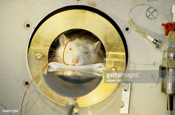 Sandoz company New medicine is tested on a mouse