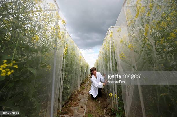 Scientific plant test area