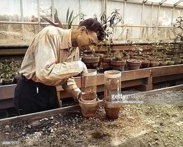 Scientist at USDA experimental farm using screen cups for insect inclusion or exclusion in a greenhouse Beltsville Maryland 1935 From the New York...