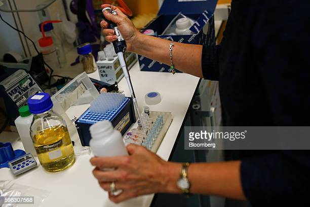 A scientist creates yeast at the new laboratories inside the Francis Crick Institute in London UK on Thursday Sept 1 2016 The institute which aims to...
