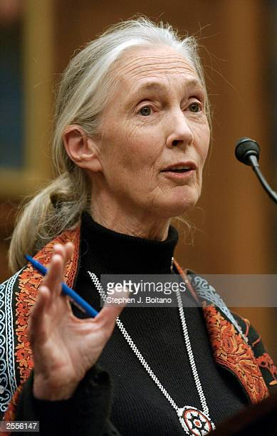 Scientist Dr Jane Goodall speaks during a bipartisan task force hearing on nonproliferation on Capitol Hill October 2 2003 in Washington DC