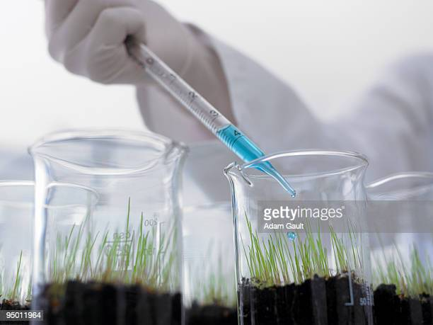 Scientist dropping liquid into seedlings in beakers