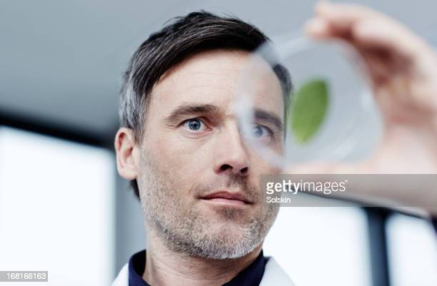 Scientist examining a green leaf in laboratory