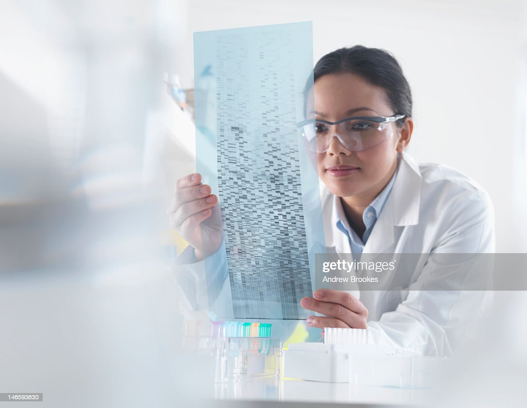 Scientist examining DNA autoradiogram : Stock Photo