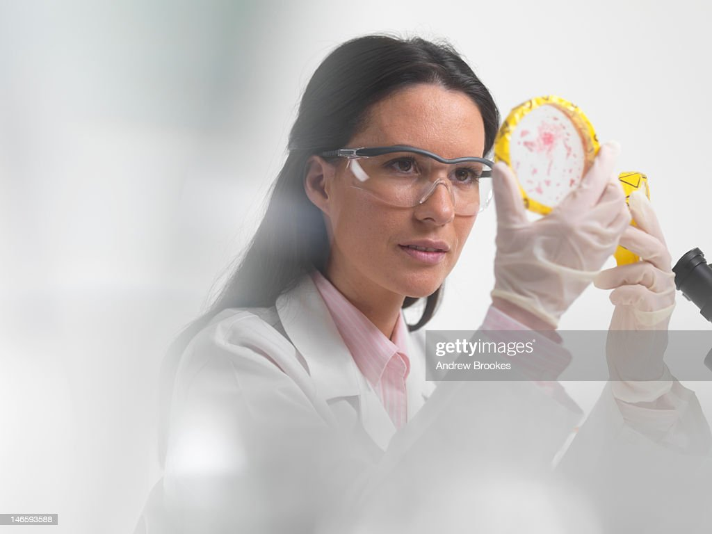 Scientist examining petri dishes in lab : Stock Photo