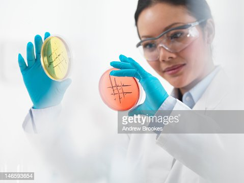 Scientist examining petri dishes : Stock Photo