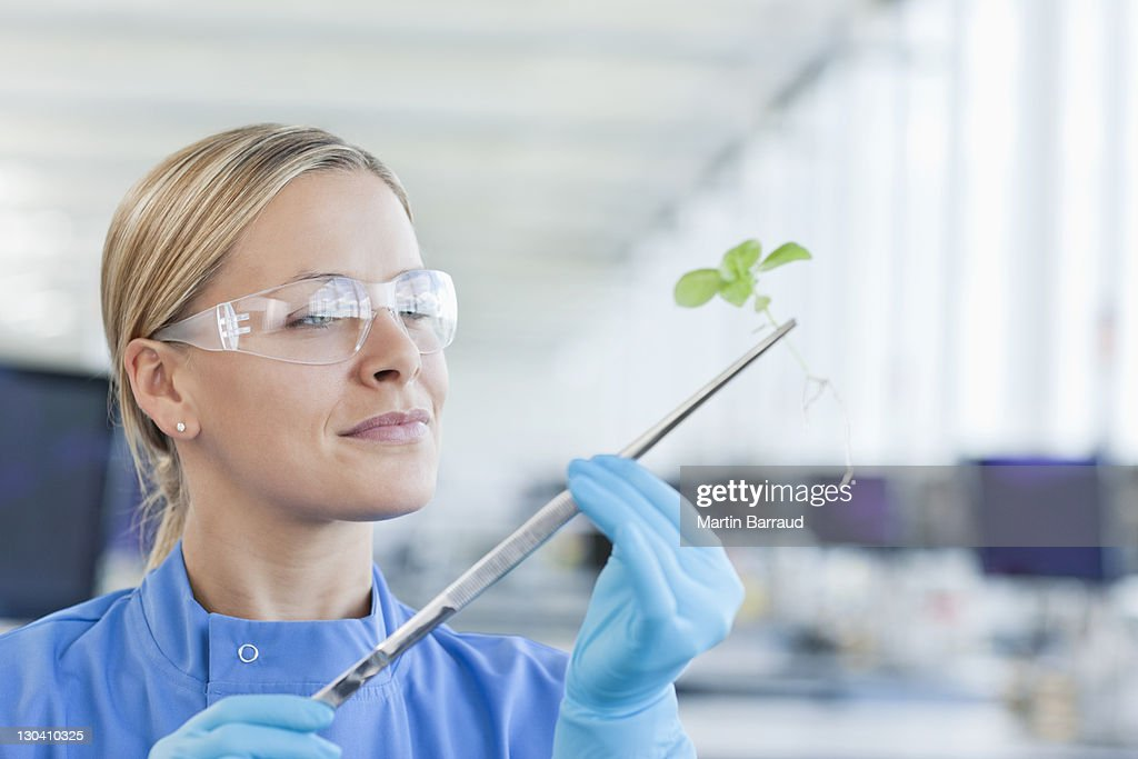 Scientist examining plant in lab : Stock Photo