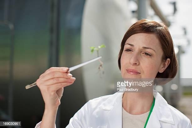 Científico examinar la planta al aire libre