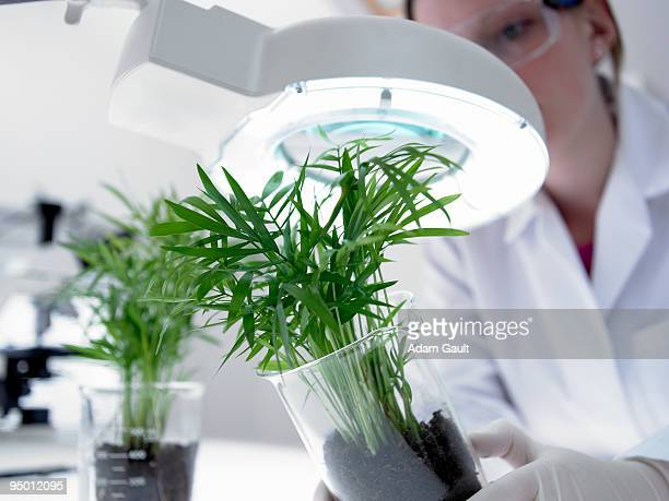 Scientist examining plants in beakers under magnifying lamp