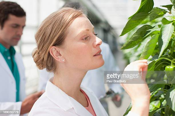 Scienziato esaminando le piante in serra
