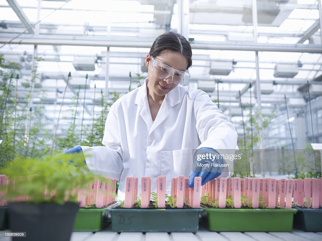 Scientist growing plants in nursery of biolab for structural analysis of DNA, protein extraction and genetic modification : Photo