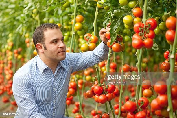 Scientist in greenhouse