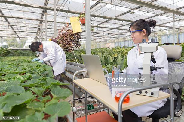 Scientist in greenhouse