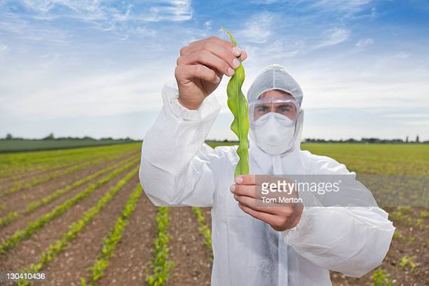 Scientist in protective gear examining plant in field