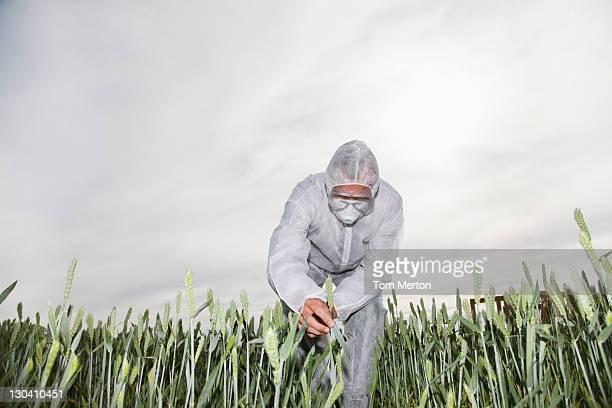 Scientist in protective gear examining plants