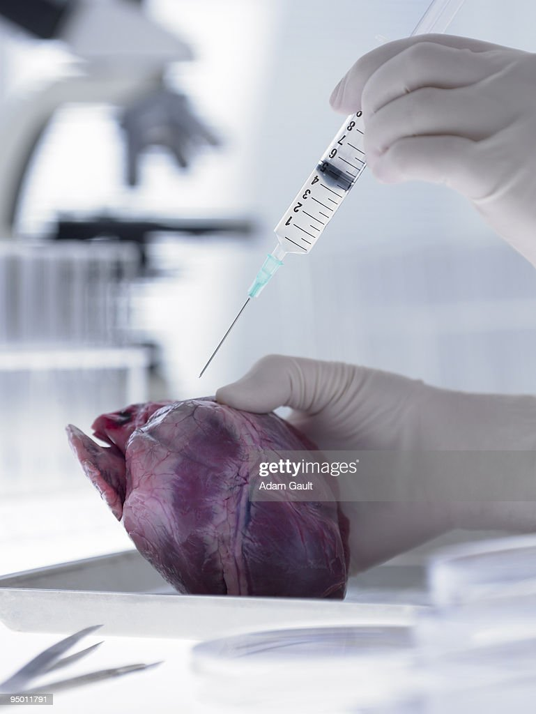 Scientist injecting heart with syringe : Stock Photo