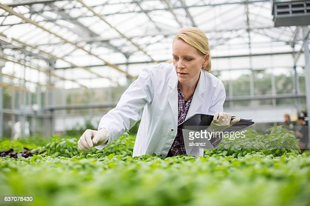 Scientist inspecting plants