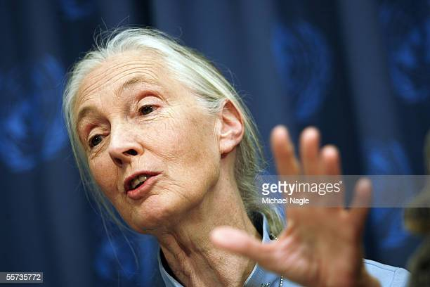 Scientist Jane Goodall attends a UN Messengers of Peace press conference at the United Nations September 21 2005 in New York City The UN sponsered...