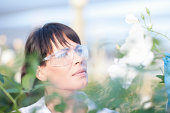 Scientist looking at plants
