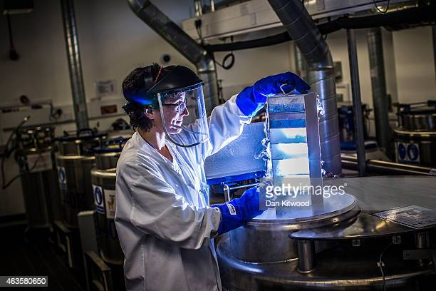 A scientist lowers biological samples into a liquid nitrogen storage tank at the Cancer Research UK Cambridge Institute on December 9 2014 in...