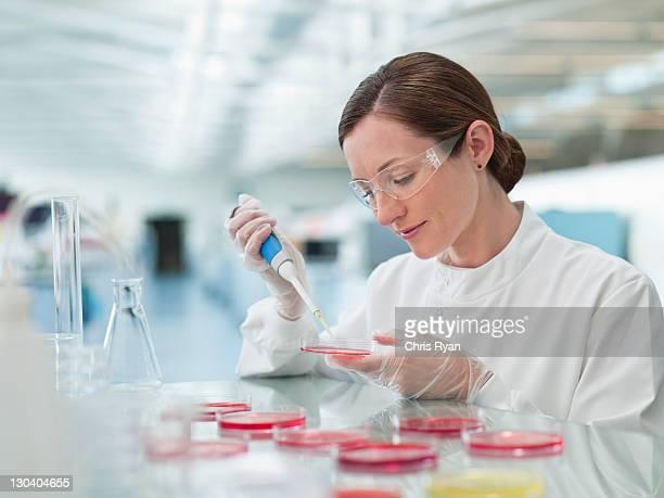 科学者でパッティングの液体シャーレのラボ
