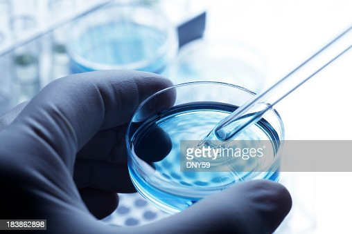 Scientist removing a sample out of a petri dish using a pipette