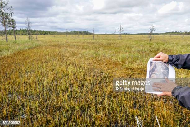 Scientist showing the regeneration of a peatland