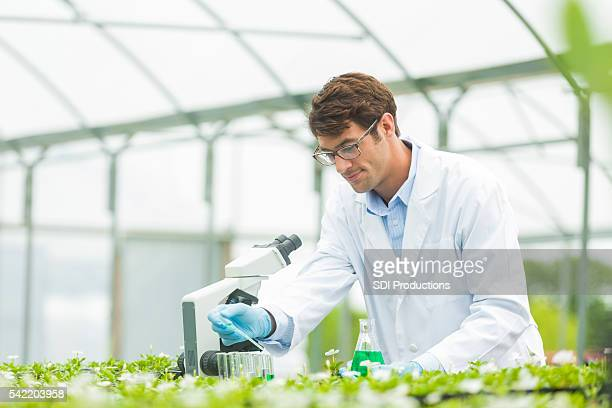 Scientist studying plants in test lab