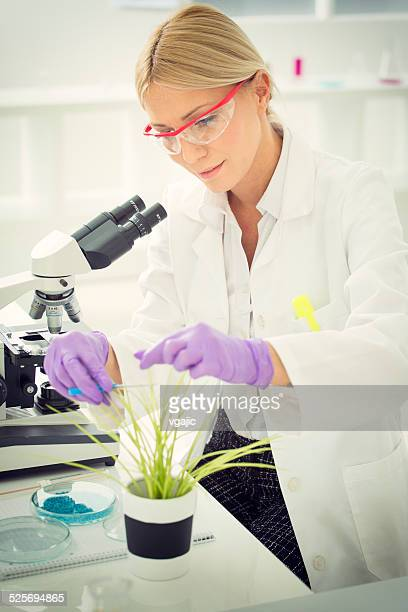 Scientist taking sample of GMO plant.