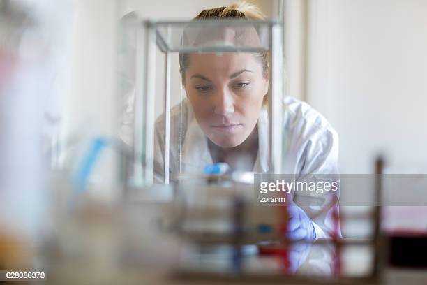Scientist using electric scale in lab