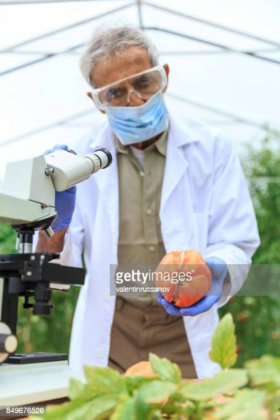 Scientist using microscope for observing plant status