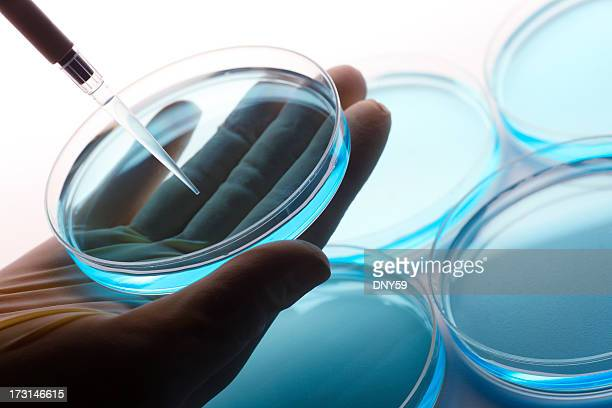 Scientist using pipette to extract liquid from petri dish