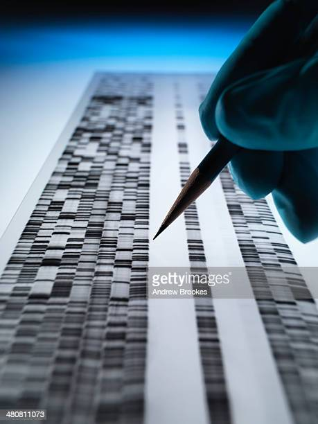 Scientist viewing DNA gel used in genetics, forensic, pharma research, biotechnology and biomedical science