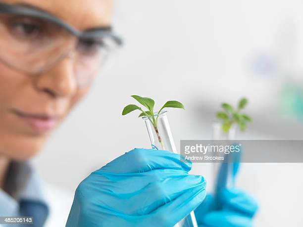 Scientist viewing seedling in test tubes under trial in lab