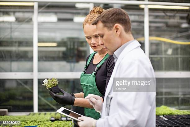 Scientist with female worker examining plants