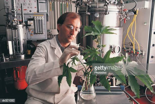 Scientist with plant in beaker
