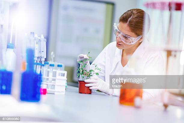 Scientist with protective eyewear working in laboratory with plants